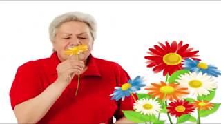 Голова садовая - Хосты после пересадки