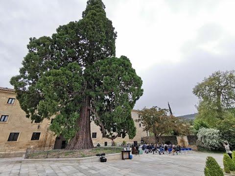Presentación del Parque natural 'Sabinares del Arlanza y La Yecla'