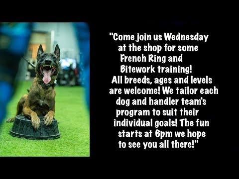 Come join us Wednesday at the shop for some French Ring and Bitework training!