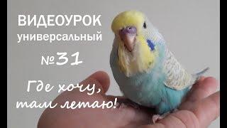"""🎧 Учим попугая говорить. Урок № 31: """"Где хочу, там летаю!"""""""