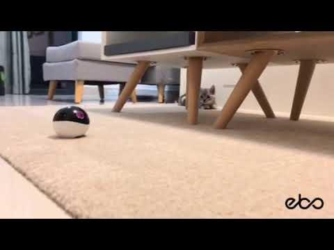 Fini de rire : ce petit robot va fliquer votre chat en comptant ses pas