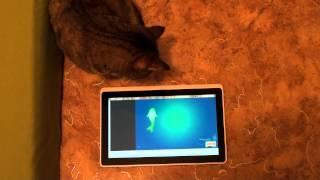 Кошка Маруся вот совсем не геймер