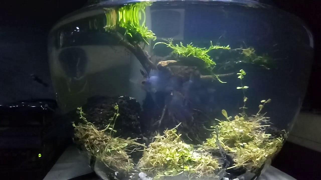 Tank Aquarium Bulat Blue Elektrik Filter Aerator