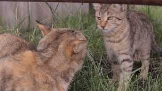Все О Домашних Животных: Коты И Уличные Прогулки