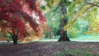 Cotswolds' Autumn colours. Batsford Arboretum