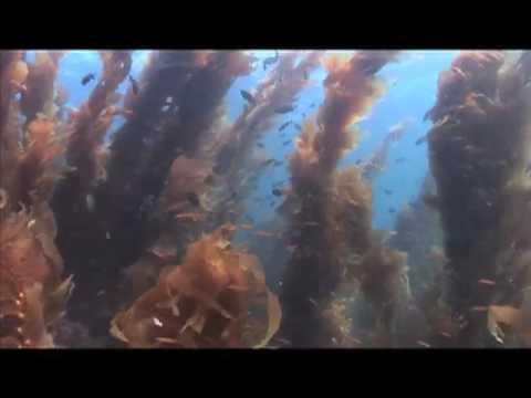 California Diving, Ship Rock, Catalina Isl.