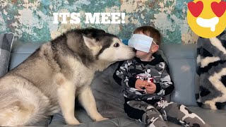 WILL MY BABY RECOGNISE MY 3 HUSKIES BLINDFOLDED CHALLENGE!! [FEMALE v MALE v PUPPY!]