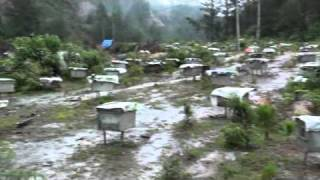 Bee colonies, bee farm near Than Uyen