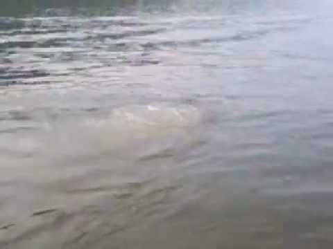 The Ohio River Monster