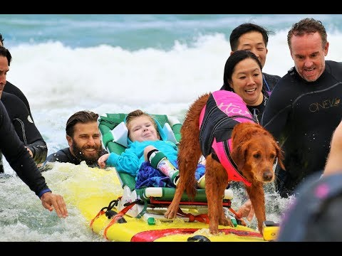 Surf Dog Ricochet -- Surf Away SMA