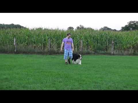 Hundeplatz Training  (2) - Dog TV Lucky Channel