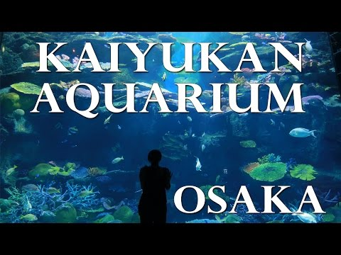 Japan Part 1- Osaka Kaiyukan Aquarium