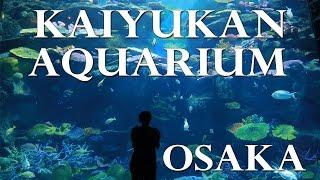 Japan Part 1- Osaka Kaiyukan Aquarium