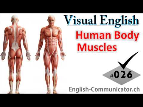 #026 Visual English Language Learning Practical Vocabulary Human Body Muscles Anterior View