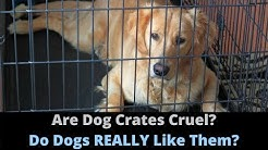 Are Dog Crates Cruel? Should You Use A Dog Crate For Your Dog Or Puppy?