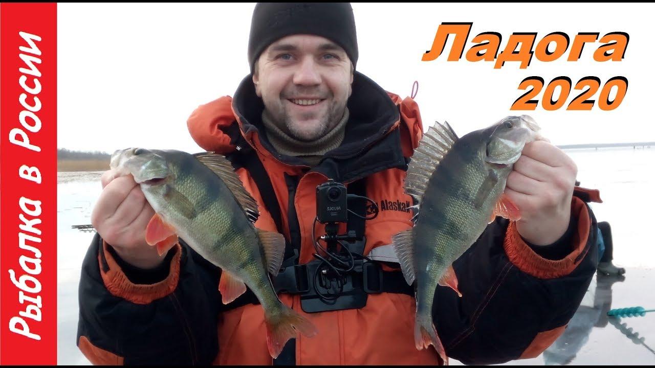 Зимняя рыбалка 2020. Ловля окуня на блесну. Ладога