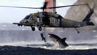 SHARK ATTACKS HELICOPTER IN AUSTRALIA???
