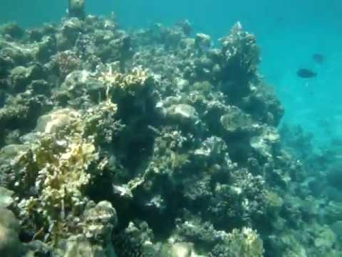 ras, mohammed, muhammed, sharm, el, sheikh, egipt, egypt, egypten, scuba, nurkowanie, diving, podwodny, underwater, tauchen, unterwasser, morze, czerwone, red, sea, rote, meer, pó�wysep, synaj, synajski, sinai, rafa, reef, nature, ryba, ryby, fish, fisch