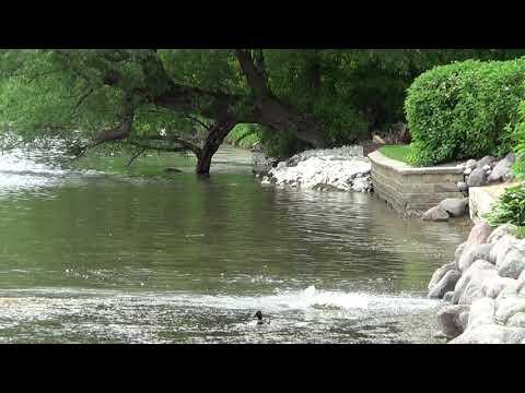 Рыба плещется в нашем озере