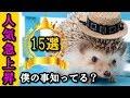 かわいい小動物で人気急上昇のハリネズミ特徴15選【飼う前に知っておきたい】