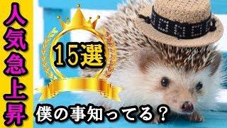 かわいい小動物で人気急上昇のハリネズミ特徴15選【飼う前に知っておき...