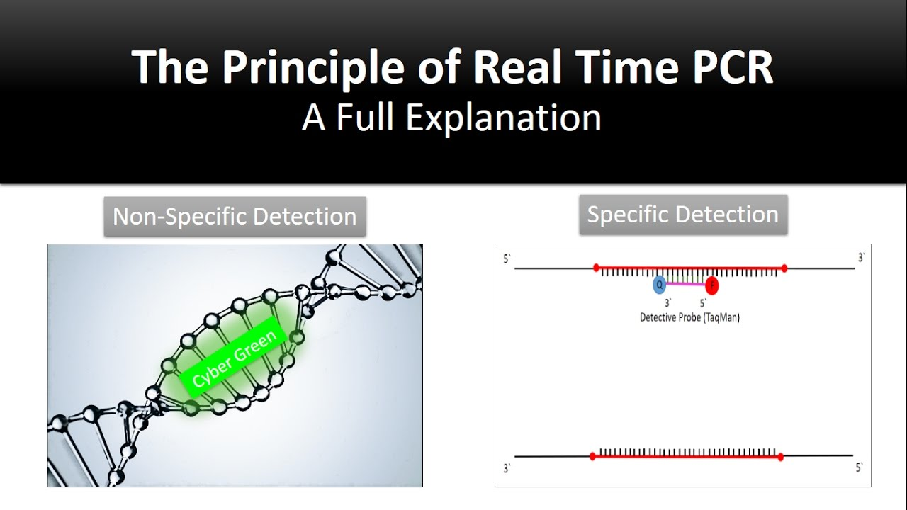 small resolution of the principle of real time pcr reverse transcription quantitative rt pcr