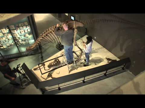 Lythronax Skeleton Time Lapse NHMU