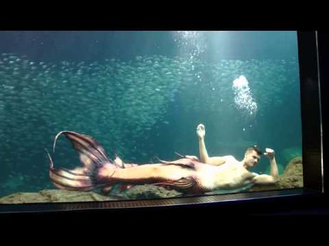 New Aquarium Mermaid Tail Design by The Mertailor Merman Eric