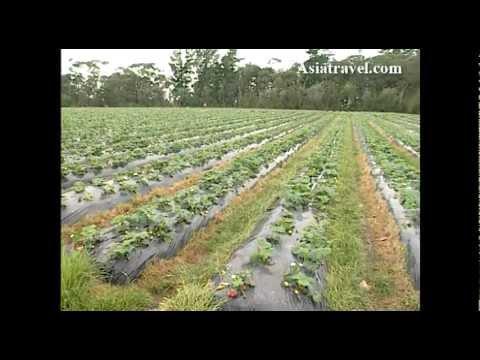 Sunny Ridge Farm, Melbourne by Asiatravel.com
