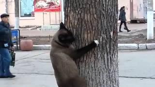 Весна пришла - коты сходят с ума