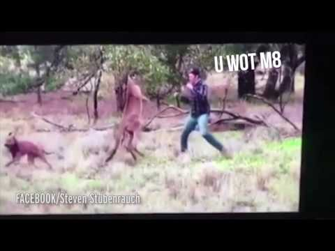Man punches Kangaroo to save his dog | With WWE Commentary