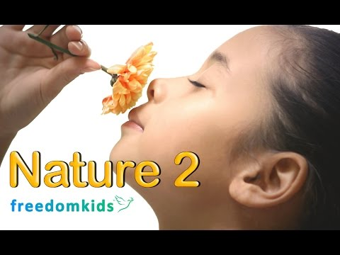 Kids Bible Videos - Nature Part 2 | Freedom Kids thumbnail