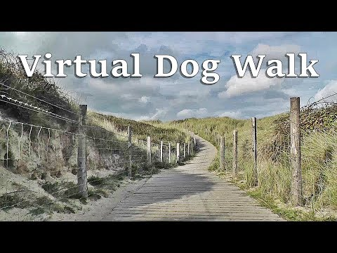 Walk Your Dog TV : TV for Dogs - Virtual Dog Walk at The Beach