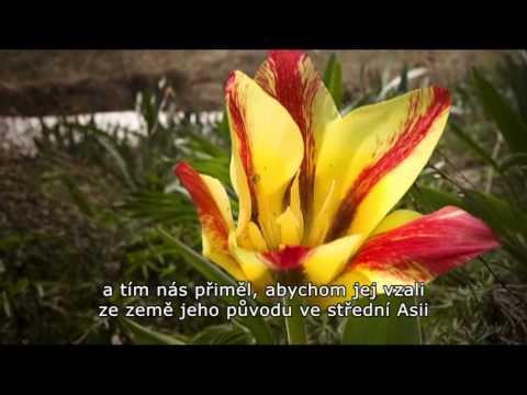 Učíme se filmem: Botanika touhy