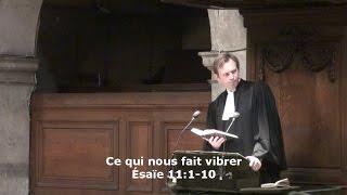 Ce qui nous fait vibrer  (Ésaïe 11:1-10)