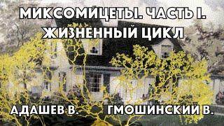 Миксомицеты. Жизненный цикл и строение спороношения  Владимир Гмошинский и Владимир Адашев