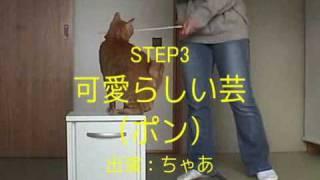 「Happy Cat」が贈る、猫のクリッカートレーニングの初心者向けのHowTo...