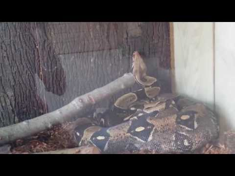 Six Flags Safari Off Road Adventure - (Part 5) - Reptile House @ Camp Adventura