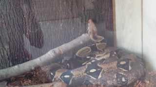Six Flags Safari Off Road Adventure - (Part 5) - Reptile House @ Camp Adventura