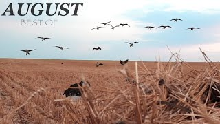 Goose Hunting 2021: Best of August