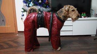 Как сшить комбинезон для собаки: пошаговая инструкция(Как сшить комбинезон для собаки: пошаговая инструкция и выкройка для тех, кто хочет сшить одежду собаке..., 2016-01-09T23:33:04.000Z)