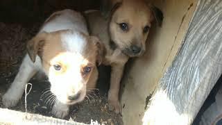 🐕Осталось два щеночка Наши подопечные щенки. Дворняжки.🐕