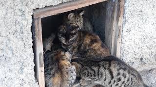 Похолодало, котята такие лапуси пушистые няшки. Едим...
