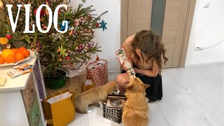ЩЕНОК ОТОДРАЛ ОБОИ потеряли Сэдди Почему наши собаки НЕ ХОДЯТ В ТУАЛЕТ на улицу НОВОГОДНИЙ VLOG