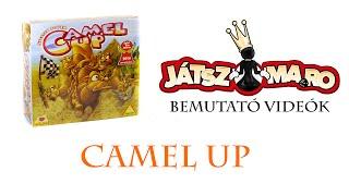 Camel up bemutató