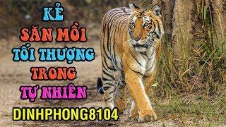 Hổ, Báo, Sư Tử, ai mới là bậc thầy săn mồi