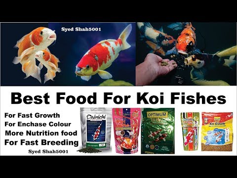 Best Food For Koi Fishes |Japanese Koi #koi Fish Fast Growth Foods