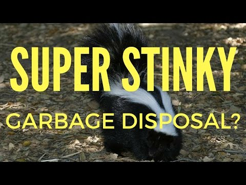 HOW TO SAFELY CLEAN A GARBAGE DISPOSAL -  NO CHEMICALS!
