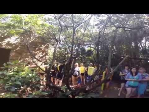 Discovery Cove   Disney 2014 Parte 1