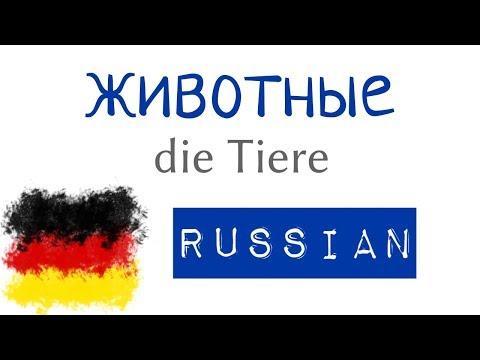 животные - немецкие предложения на русском - A1, A2 - немецкий для начинающих с нуля (12)